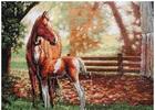 Набор для вышивания Dimensions Лошадь с жеребенком (35260)